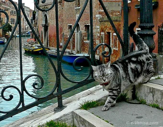 chats de Venise, sur le pont dei Mori dans le Cannaregio